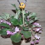 19 июля, день пчелы